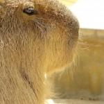 王子動物園の写真まとめ。動物たちは今日も元気です
