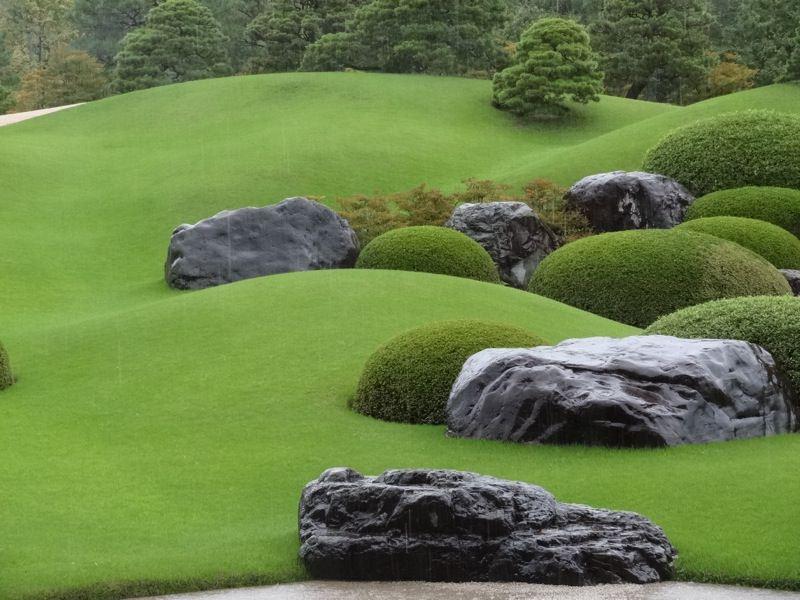 気持ちよさそうな芝生