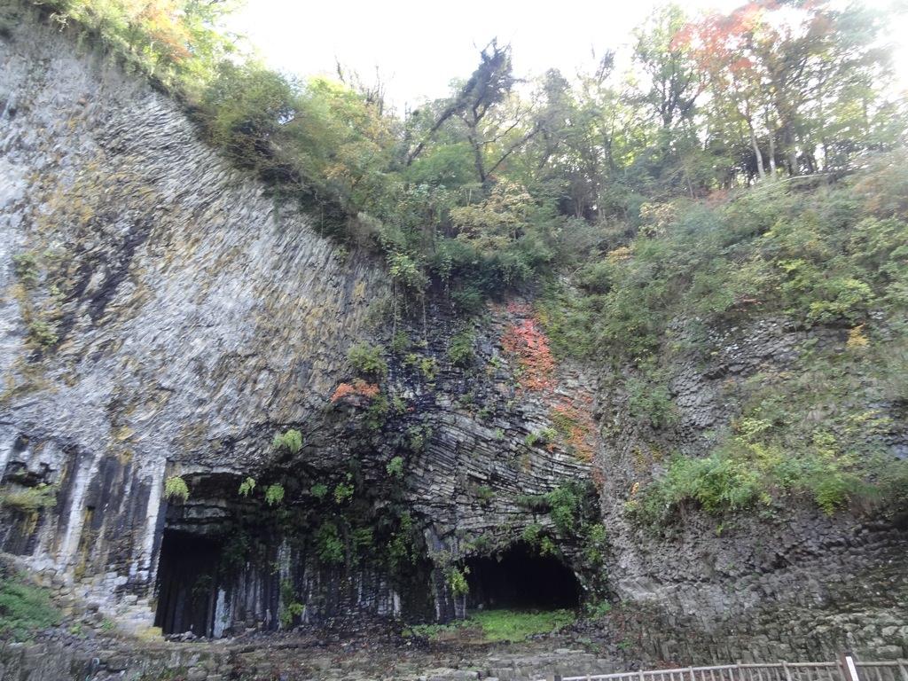 玄武洞の上には木がうじゃうじゃ