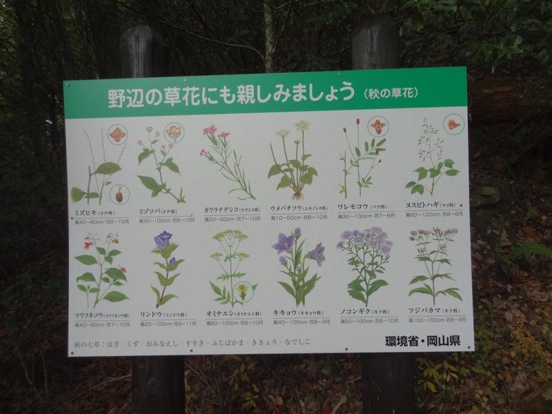 野辺の草花にも親しみましょう