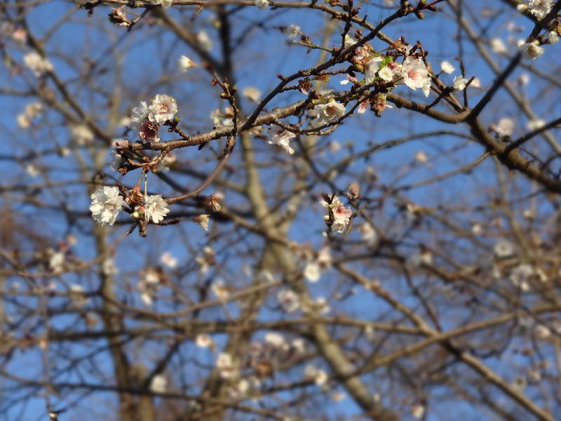 鶴山公園に咲いていた花