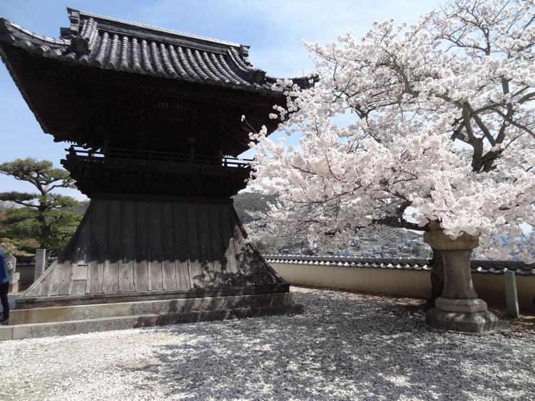 西国寺手前のお堂と桜
