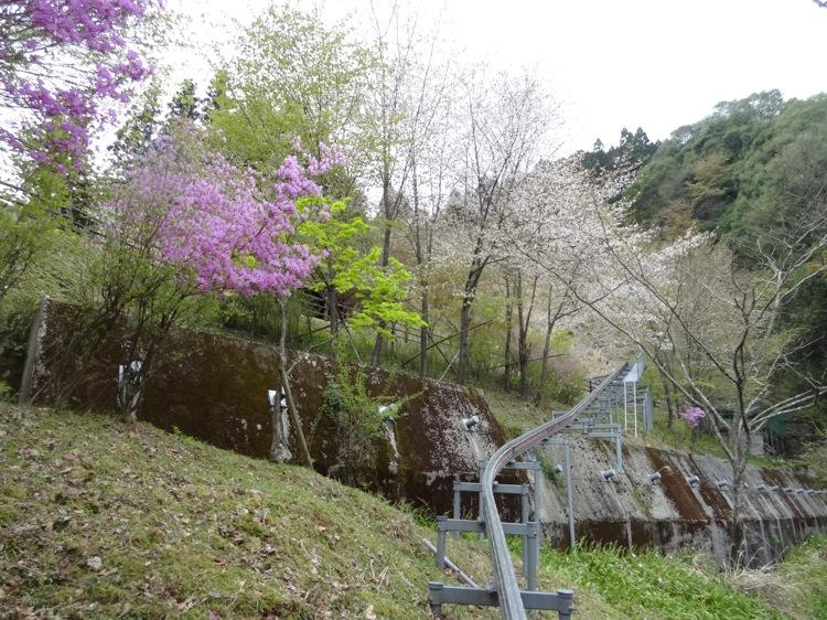 モノライダーから見る景色 花が咲いています