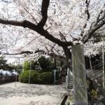 尾道の千光寺(せんこうじ)は日本有数の眺望スポットです
