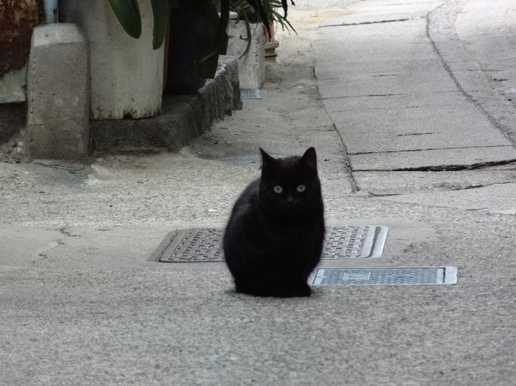 篠島にいた黒猫