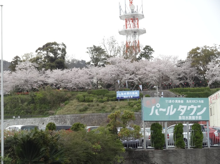 鳥羽 城山公園の桜を遠くから見る