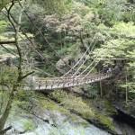 恐怖を感じながら渡る「祖谷のかずら橋」景色は抜群に良いです!