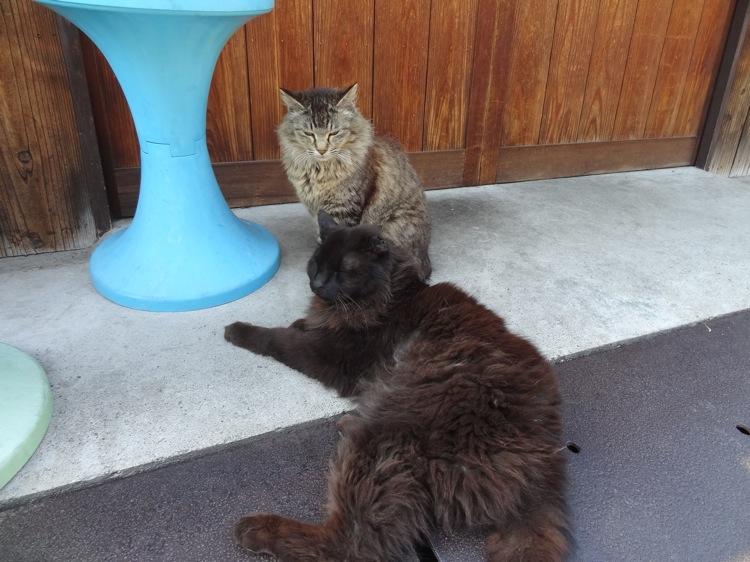 石井商店の前にいた猫