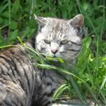 直島ダムとゴミ箱アートと野良猫