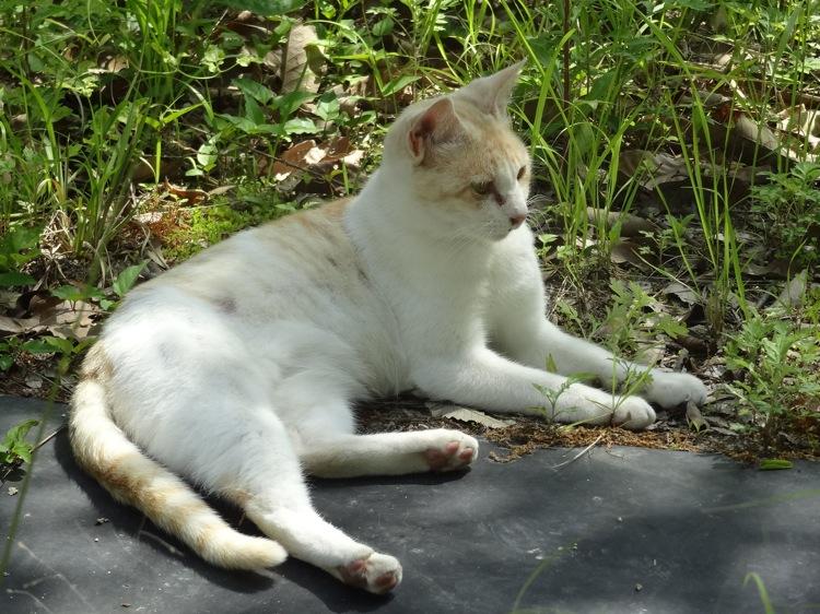 いっぷく茶屋の近くにいた猫