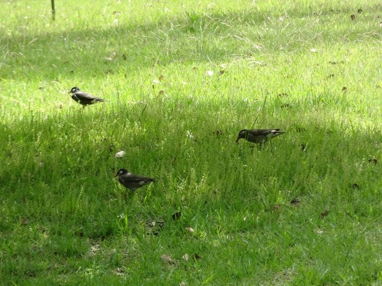 栗林公園に遊びに来た鳥さん