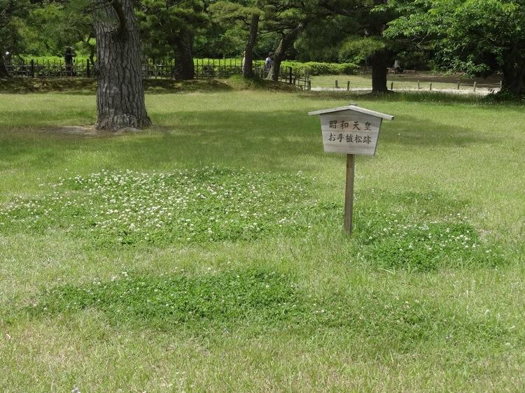 昭和天皇 お手植松跡