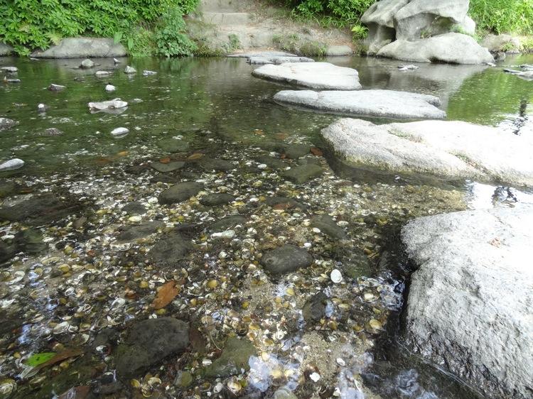 栗林公園の澄んだ水