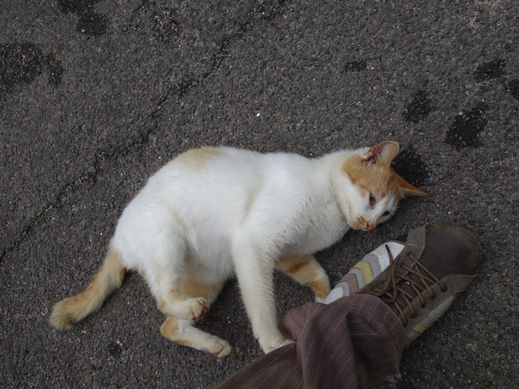 男木島 ネコ