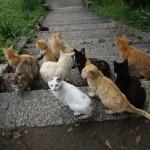 猫好きにはパラダイス!2時間でまわる男木島観光ガイドと写真まとめ
