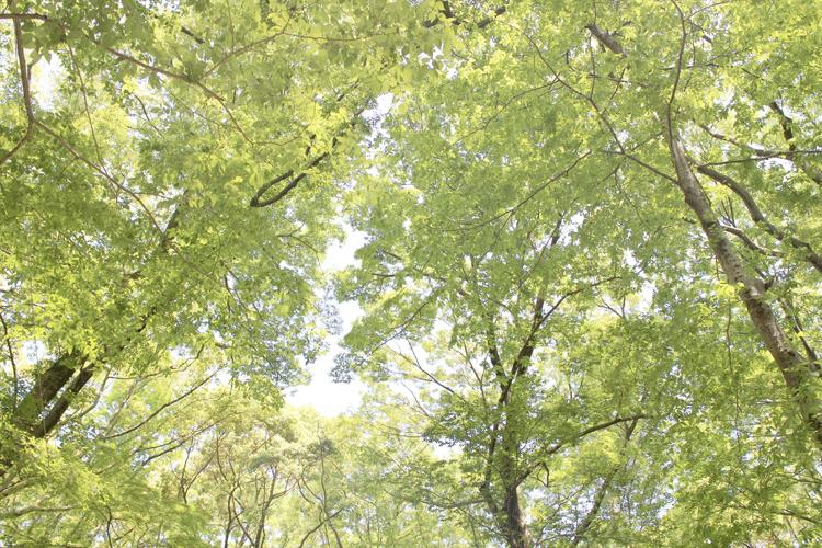 下鴨神社 糺の森の緑