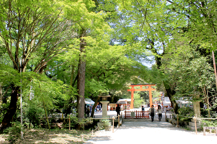 下鴨神社 自然