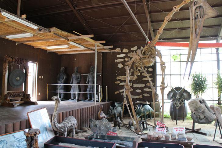 カフェくるくま 恐竜の展示