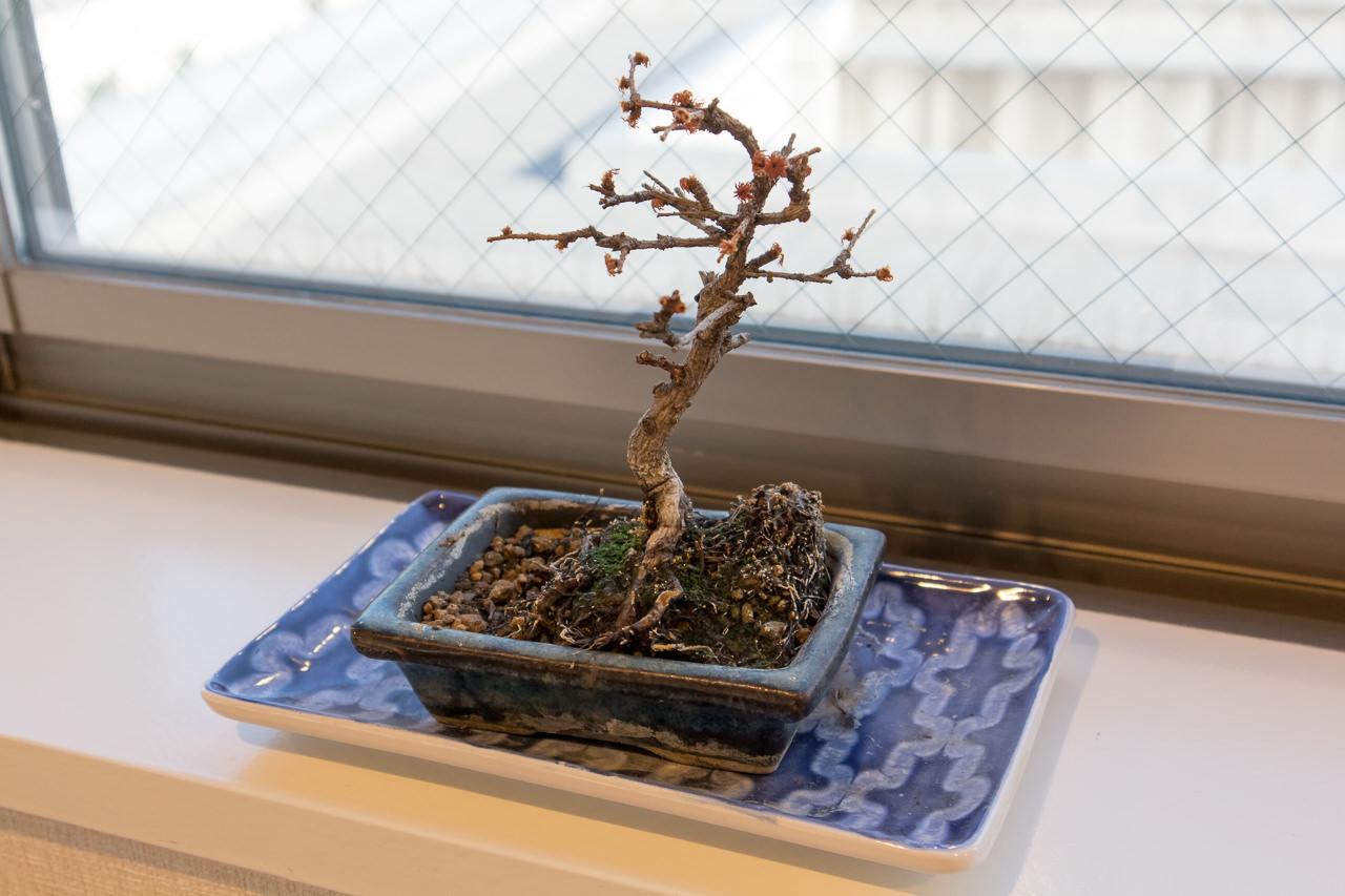 The Stay Sapporoラウンジの盆栽