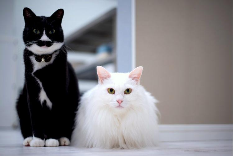 ゲストハウスORI ORIのネコ
